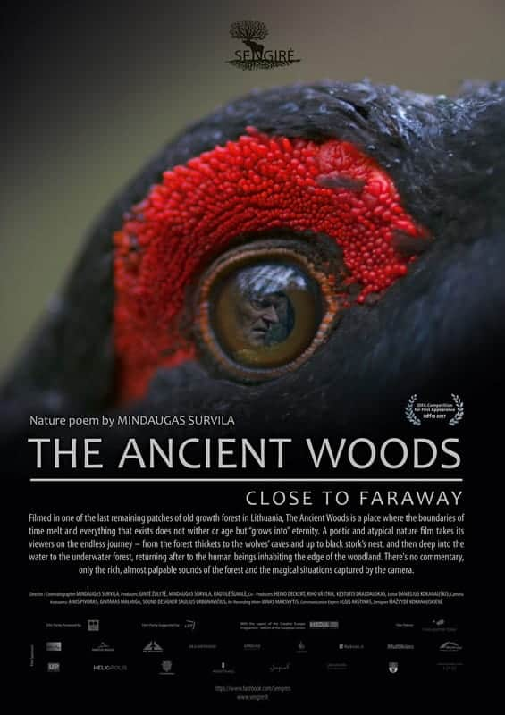 The Ancient Woods*
